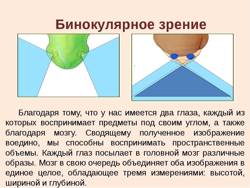 Бинокулярное зрение: механизм, исследование, лечение нарушений