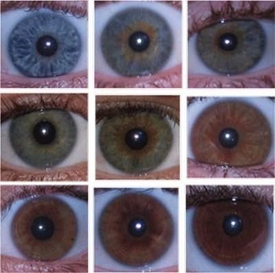 Что означает цвет глаз хамелеон. могут ли быть глаза-хамелеоны у человека и что это значит? что скажут глаза-хамелеоны о мужчине