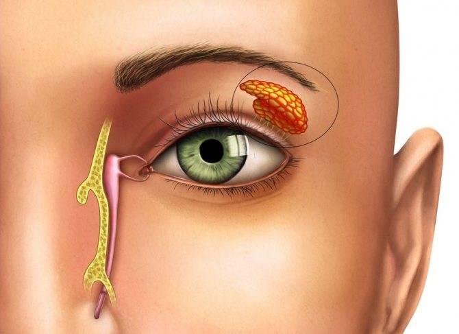 Закисают глаза у взрослых причина лечение