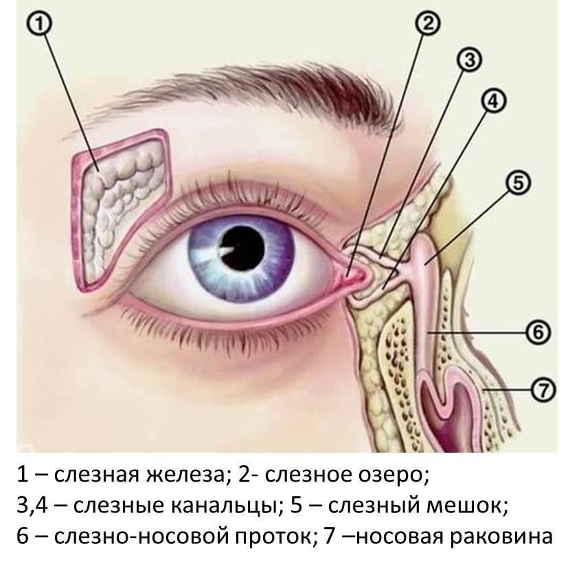 Где находится конъюнктивальный мешок глаза — лечение заболеваний
