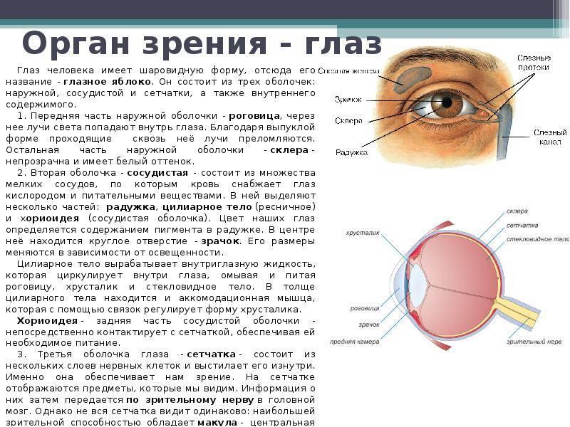 Гигиена органов зрения, правила ухода за глазами человека