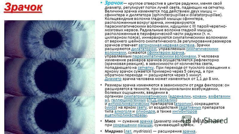 Зрачки разного размера у взрослого: причины, почему диаметр и величина