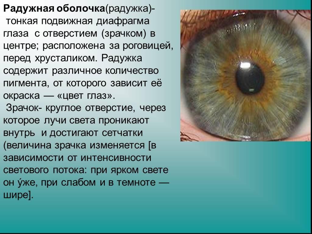 """Глаза-хамелеоны: почему меняется цвет глаз - """"здоровое око"""""""
