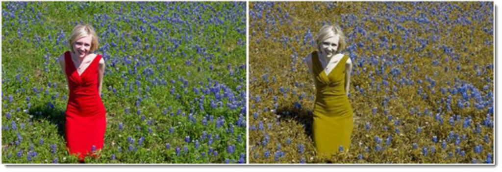 Как видят дальтоники: какие цвета путают и что видят, степени дальтонизма и как передаётся заболевание