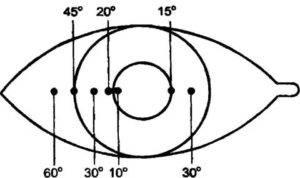 Угол косоглазия по гиршбергу — офтальмология