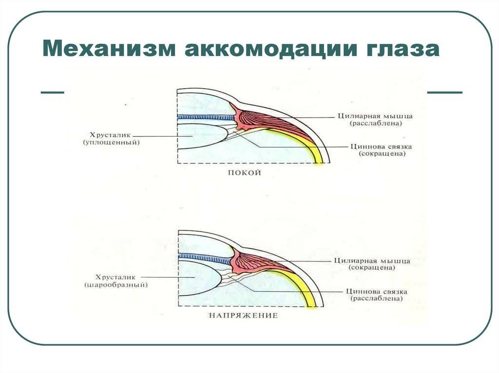 Аккомодация глаза человека - что это такое, причины нарушений