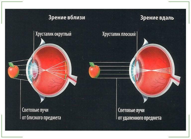 """Аккомодация: механизм и функции, диагностика - """"здоровое око"""""""