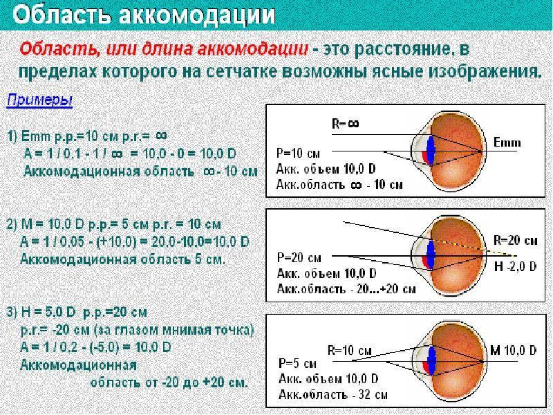 Аккомодация глаза: виды, функции и механизм действия