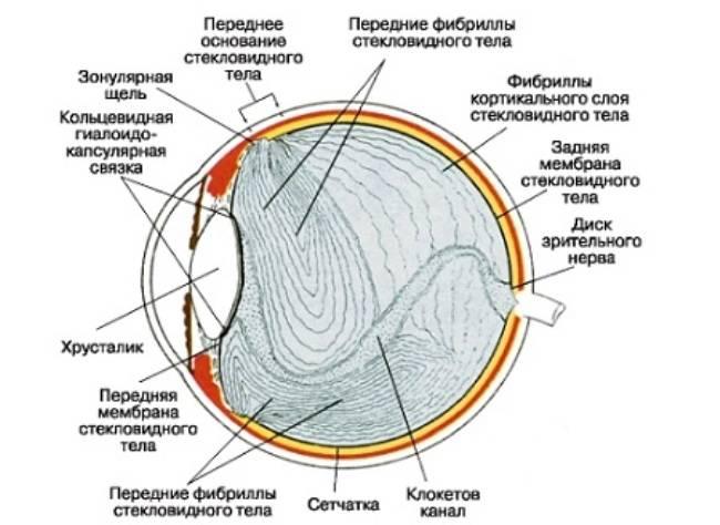 Деструкция стекловидного тела глаза чем опасно, найдено решение, лечение народными средствами, как лечить, фото, форум