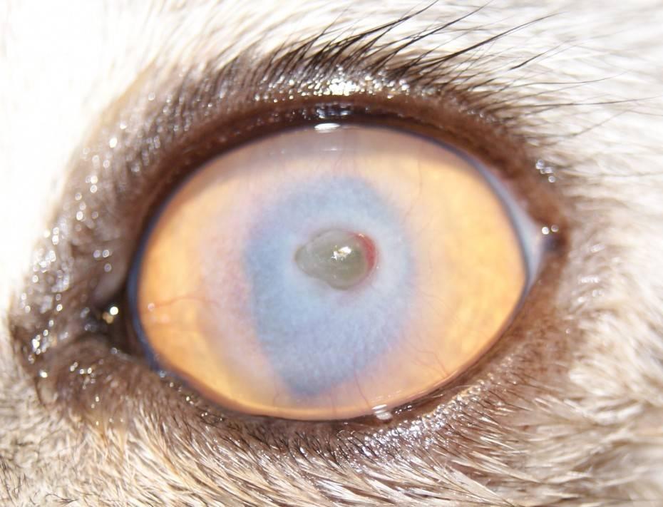 Заболевания роговицы глаза: фото, описание болезней