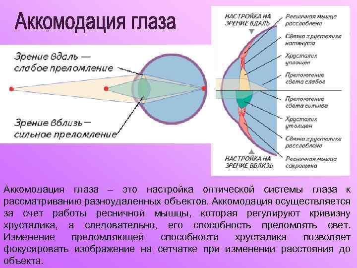 Аккомодация зрения