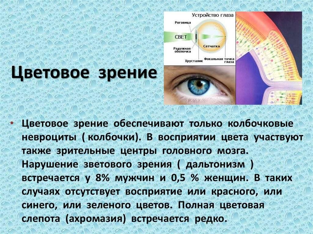 Eye spy: процентное соотношение цвета глаз по всему миру