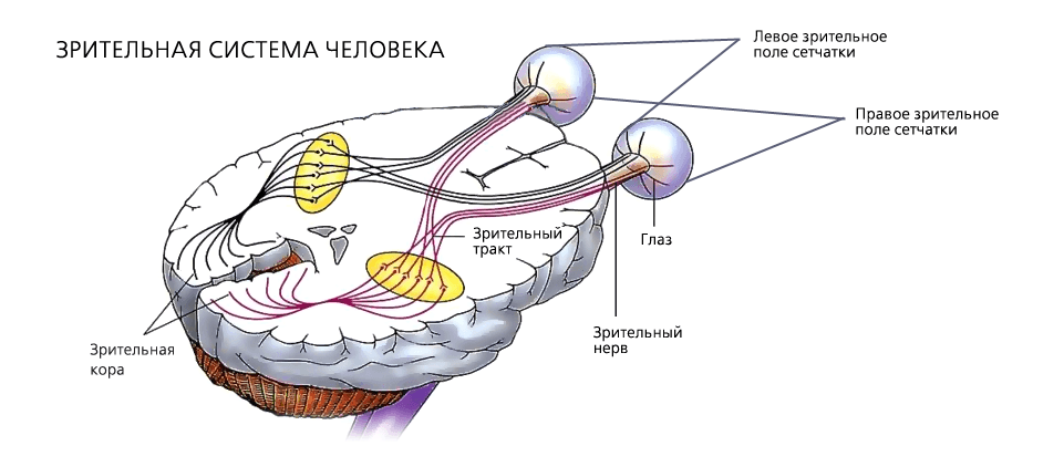 Как обследуют зрительный нерв и его диск?