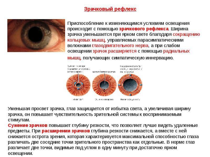 Почему увеличивается зрачок глаза у мужчин