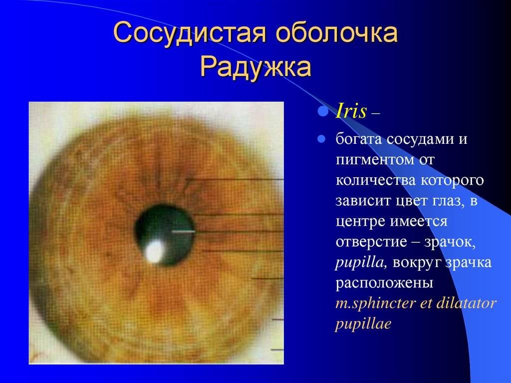 Колобома радужки глаза: причины и лечение заболевания радужки и дзн