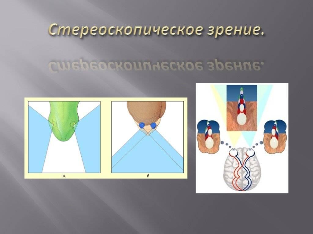 Стереоскопическое зрение — офтальмология