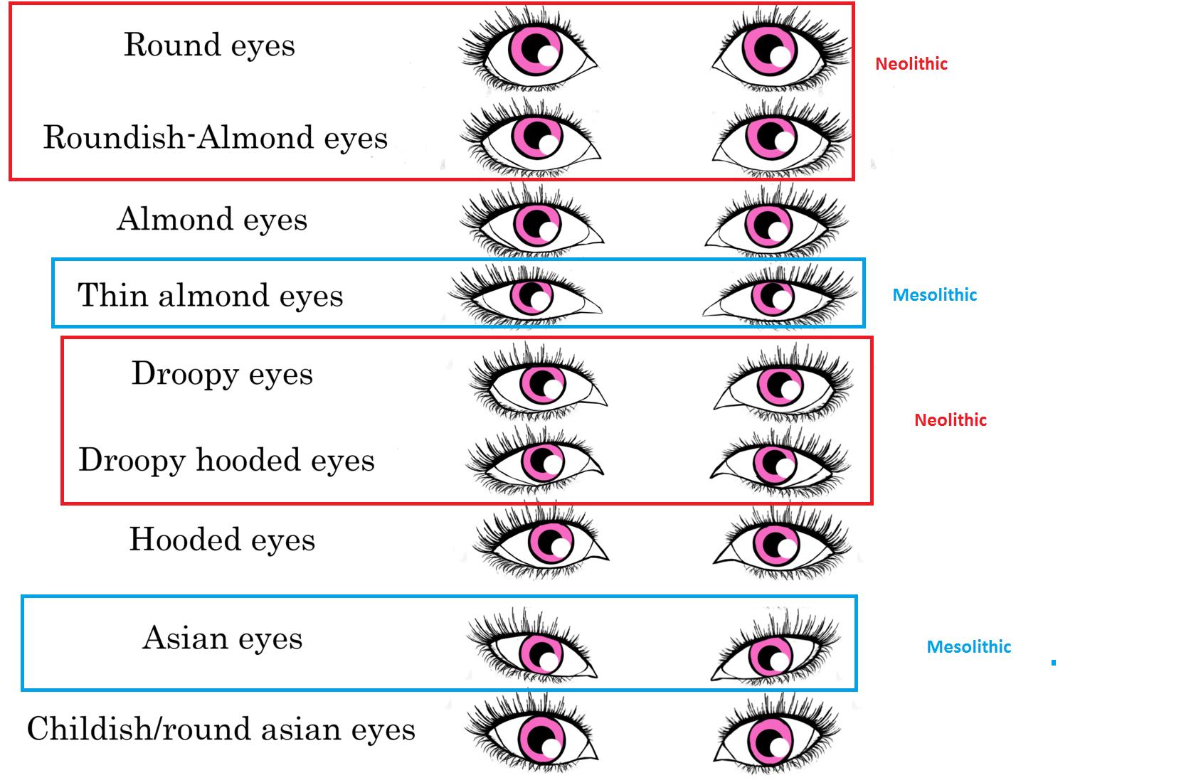 Физиогномика: глаза. характер по глазам -  junona.pr