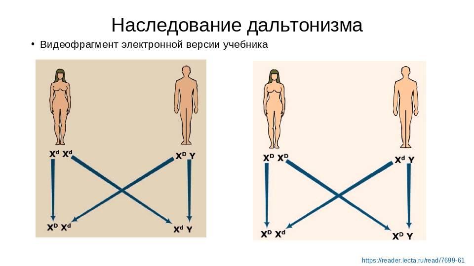 Особенности внешности передаются по наследству и другие интересные факты о генах — тестостерон