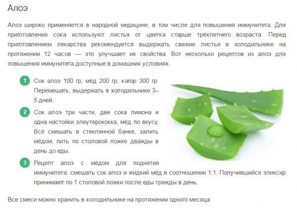 Алоэ в ампулах для лица: удивительное средство (топ-5 рецептов)