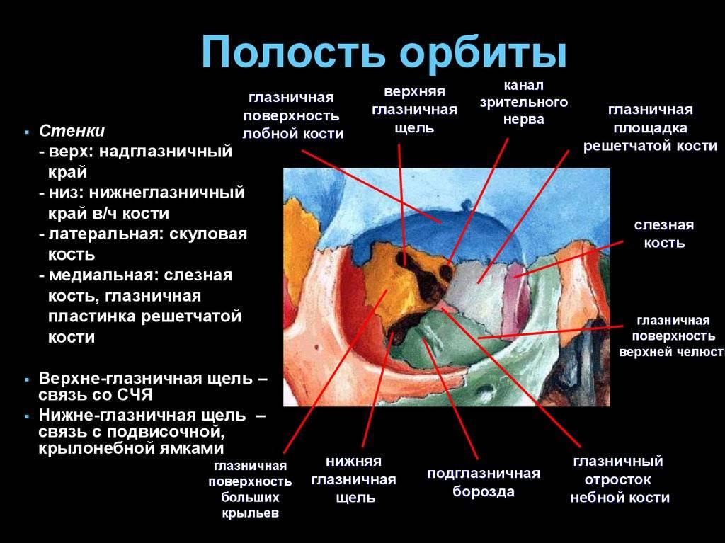 Что такое глазница: анатомия и топография