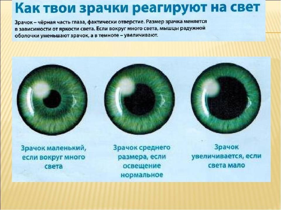 Сигналы зрачков глаз