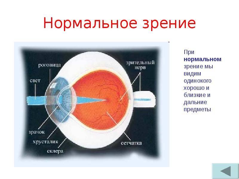 """Поле зрения: методы диагностики - """"здоровое око"""""""