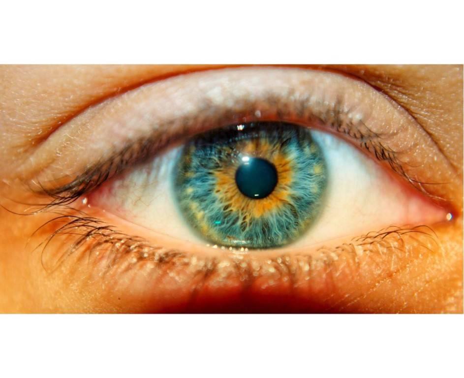 Болотный цвет глаз