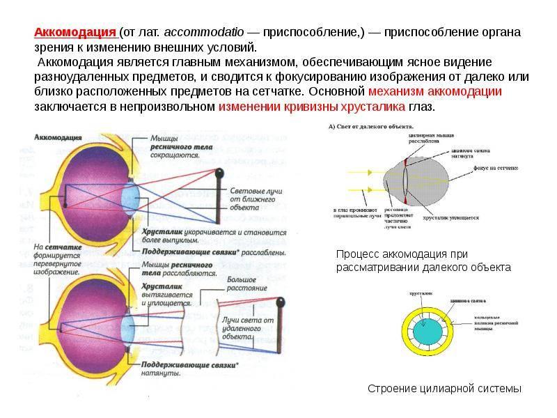 Аккомодация глаза: виды нарушений и методы лечения