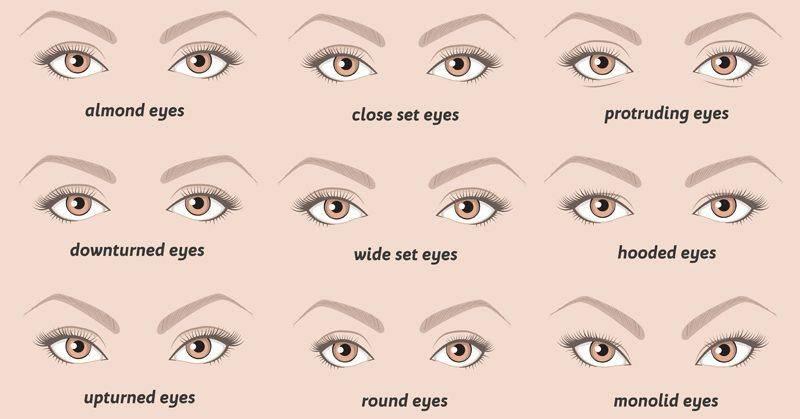 Особенности строения человеческих глаз.
