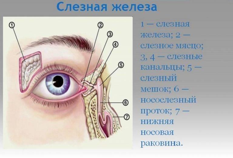 Слезоточивость глаз – причины и лечение. как и чем вылечить в домашних условиях