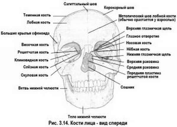 Почему может болеть кость под глазом или над ним — причины и лечение симптома