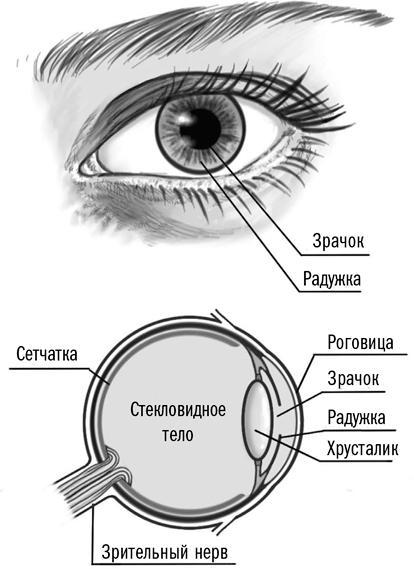 Что сделать, когда линза прилипла к глазу и не снимается