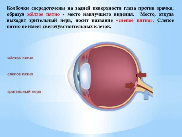 Появилось слепое пятно в поле зрения