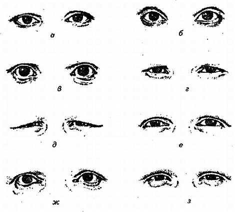 Формы глаз: типы и техника макияжа