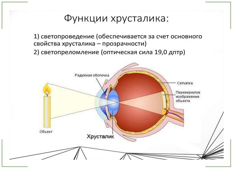 Строение глаза человека - структура человеческого в анатомии, название части и состав, схема, из чего состоит, функции внешнего органа