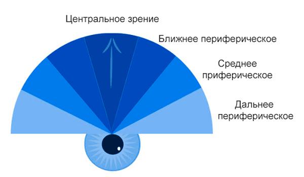 Поле зрения человека: в градусах, норма, исследование oculistic.ru поле зрения человека: в градусах, норма, исследование