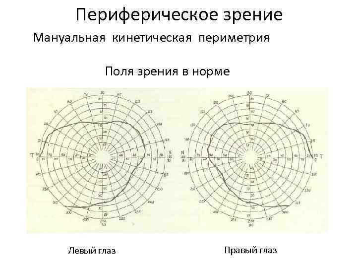 Периферическое зрение - что это периферия, как развить периферийное, как называется боковое, как правильно, центральное