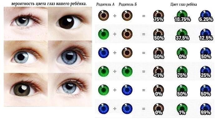 Какой будет цвет глаз у ребенка