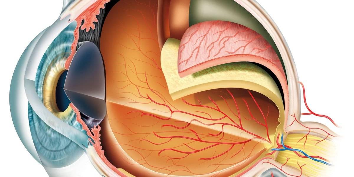 Какую задачу выполняет хрусталик глаза и когда требуется его замена