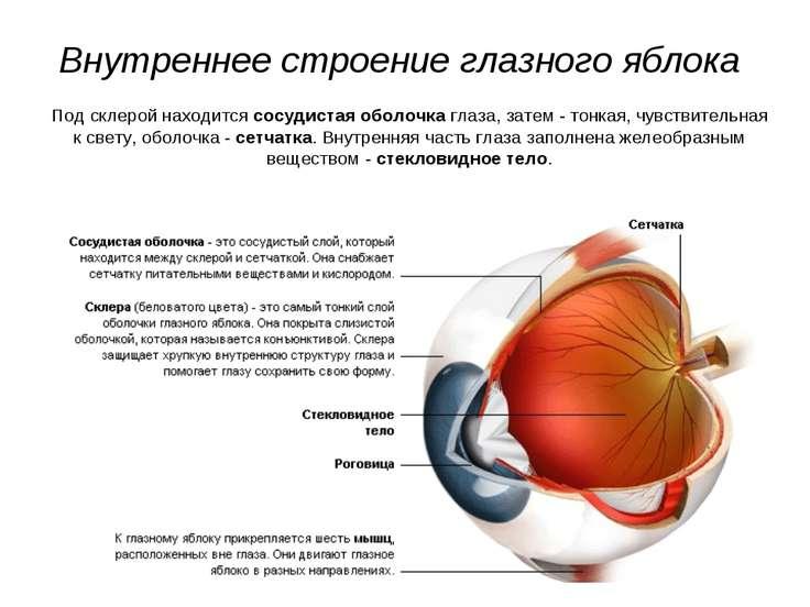 Строение глазного яблока человека :: syl.ru
