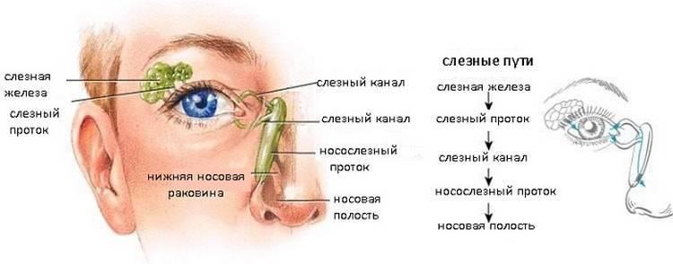 Воспаление слезного канала у взрослых - что делать и как лечить