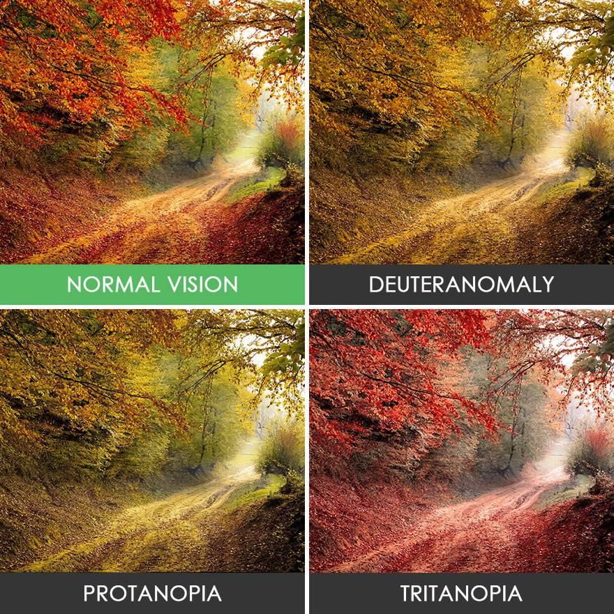 Кто такой дальтоник: как он видит мир, какие цвета не различает, причины заболевания