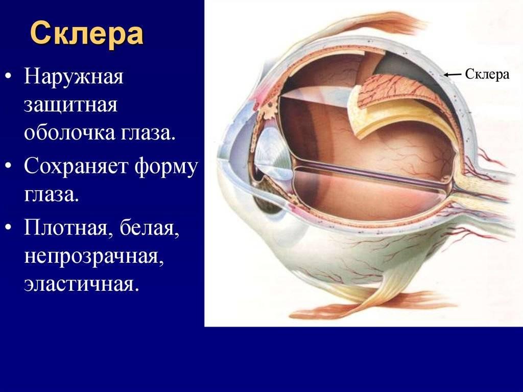 """Роговица глаза: строение и функции - """"здоровое око"""""""