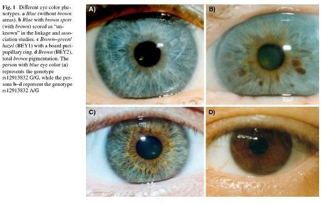Цвет глаз у младенцев: как меняется и каким будет