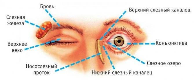 """Конъюнктивальный мешок: строение и функции - """"здоровое око"""""""