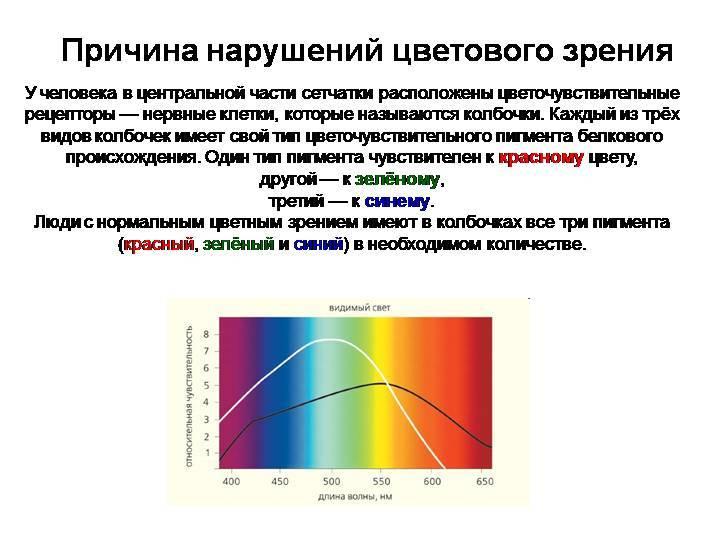 Дальтонизм. признаки, классификация и диагностика.
