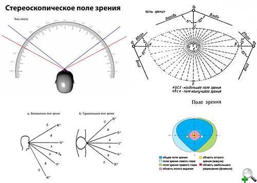 Поле зрения человека - медицинский справочник medana-st.ru