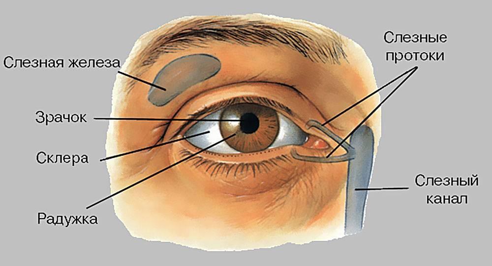 Белые выделения в углах глаз у ребенка и взрослого: от чего появляется налет, медикаментозные и народные средства от слизи и инфекции