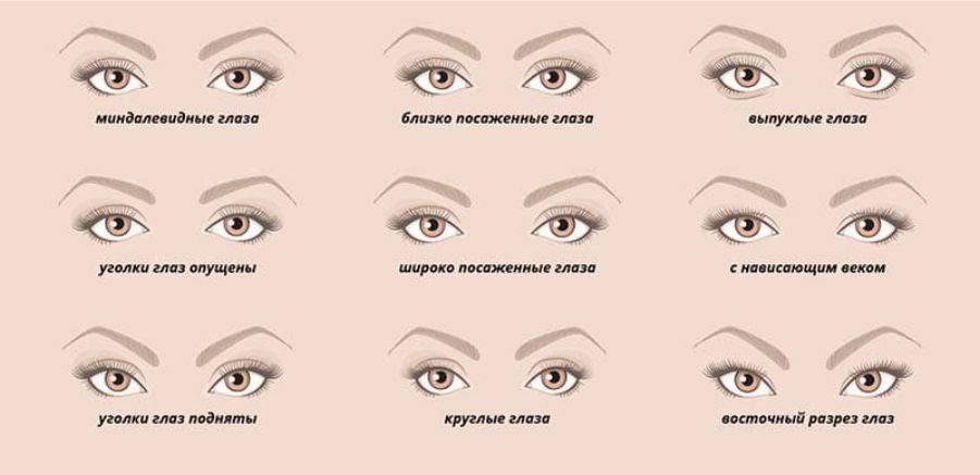 Форма глаз: какие черты характера присущи людям с разным разрезом глаз, самый идеальный и самый распространенный тип глаз человека