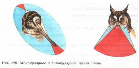 Бинокулярное зрение: что это означает, отклонения и методы лечения